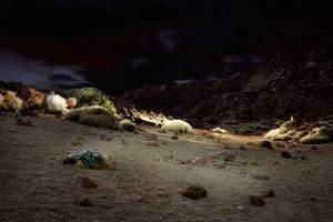 Nights on earth 1_2011.11.16-landscape-teneriffa